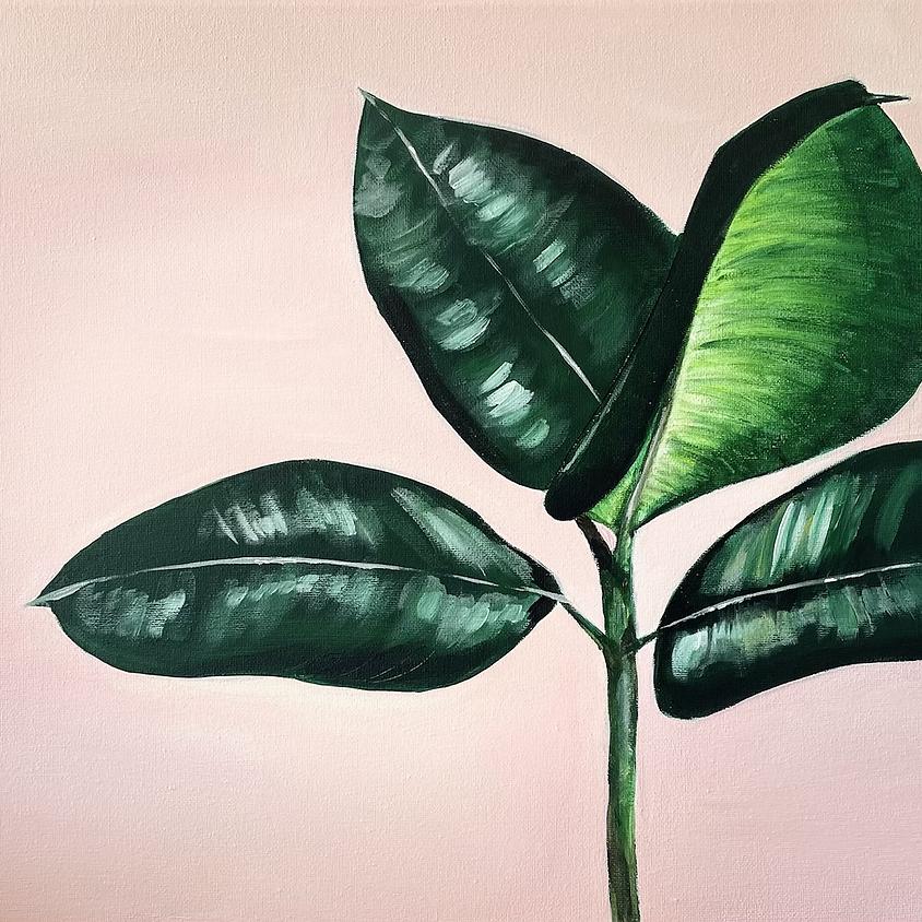 Ficus Plant - Hamilton