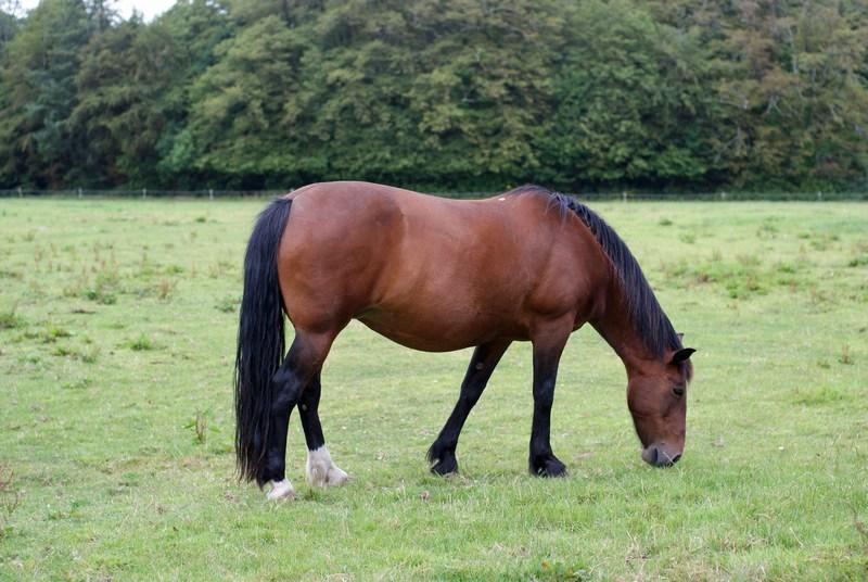 Castlemartyr Horse - 1