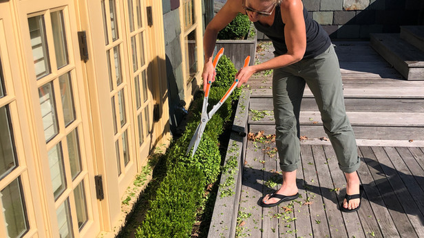 Terrace Boxwood Pruning