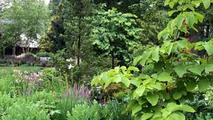 Lush Perennial Garden