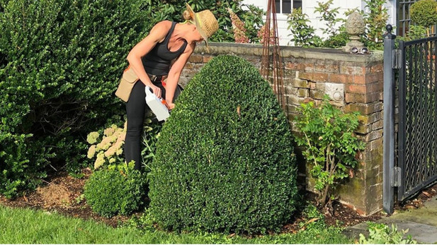Boxwood Pruning