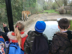Y2 Visit Marwell Zoo
