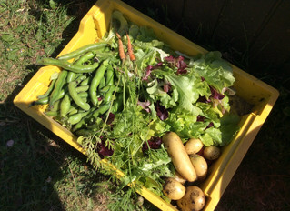 Look at Our Harvest!