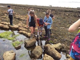 Year 3 go 'Rock Pooling'