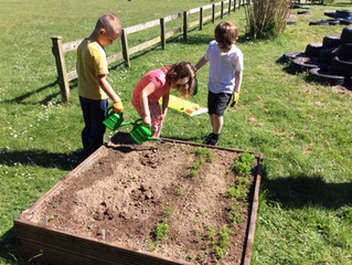 Fun at the Allotment
