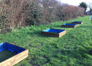 Our New PE Allotment