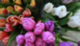 Flowers tulips gift