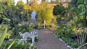 Shai'ya taking her morning stroll through the gardens