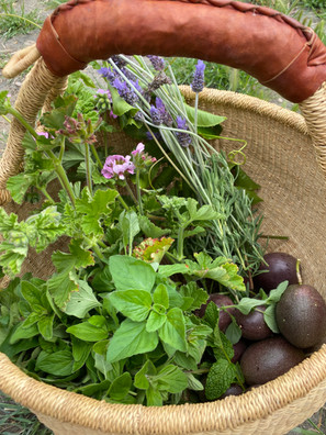 Herbs and fruit from the organic gardens