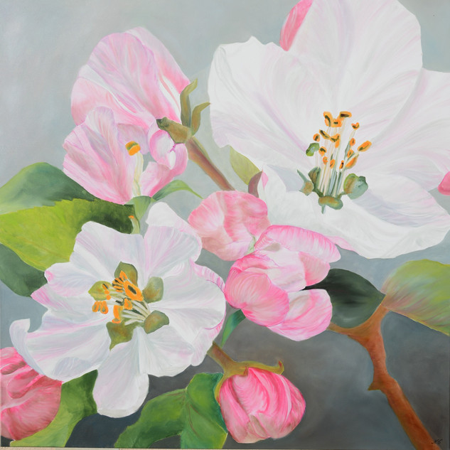 fleurs pommiers. VENDU