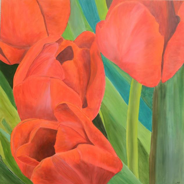 tulipes rouges.VENDU