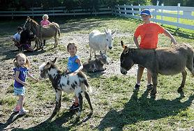Donkey-Farm-3-WEB.jpg