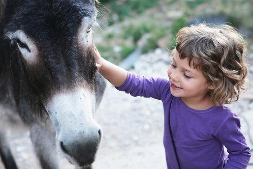 Adopt A Donkey & Sponsor A Program