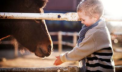 Child feeding pony in the mini zoo.jpg