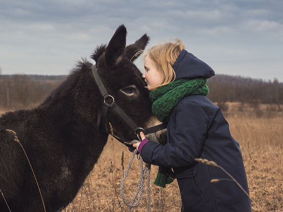 A girl kisses a donkey. Child in the fie
