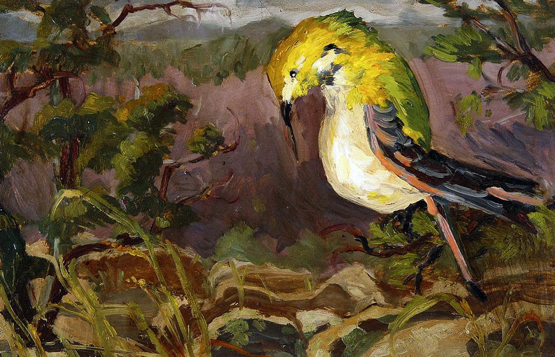"""""""Sandia Bird"""""""