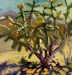 """Coronado Cactus"""