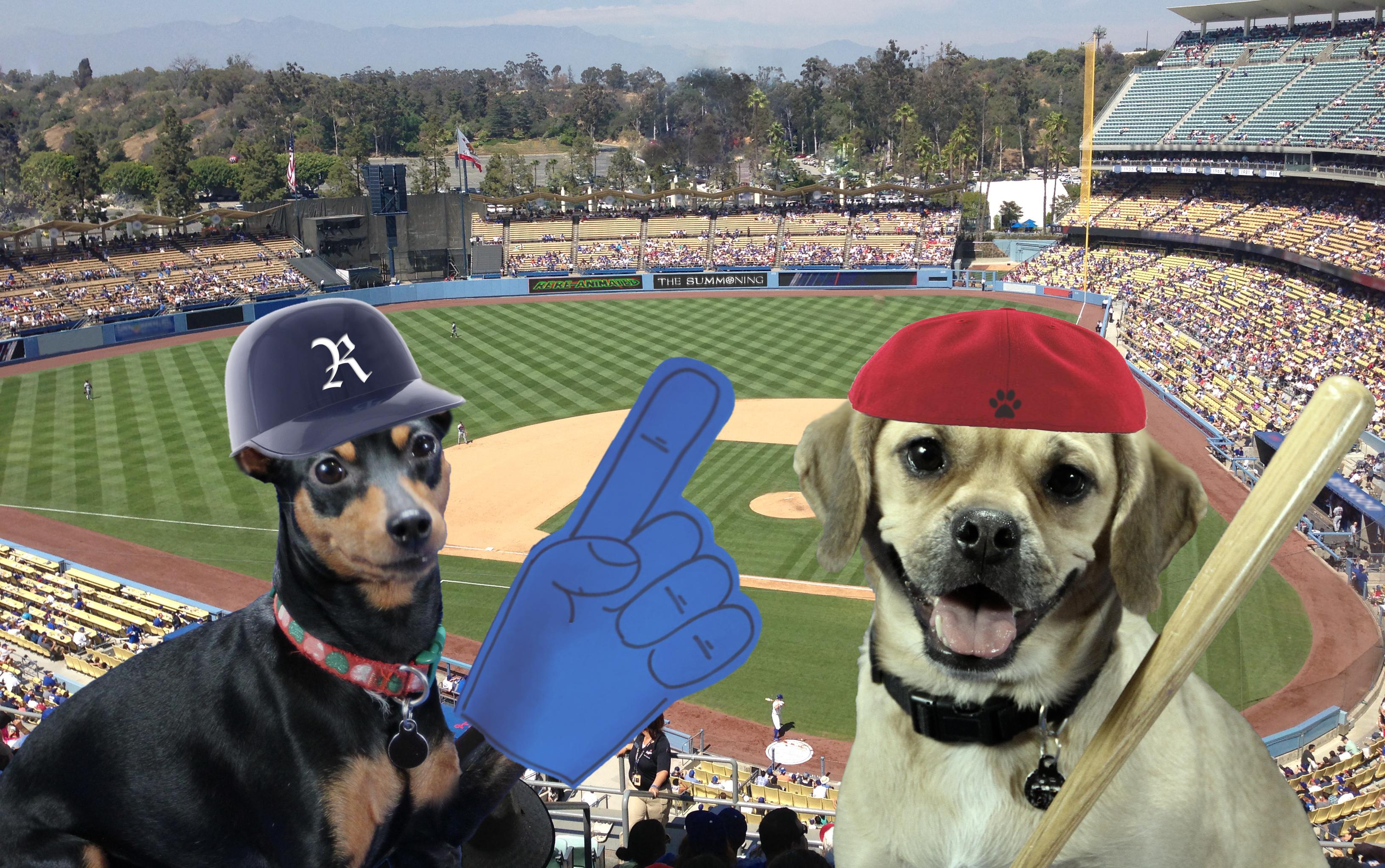Pugzy baseball