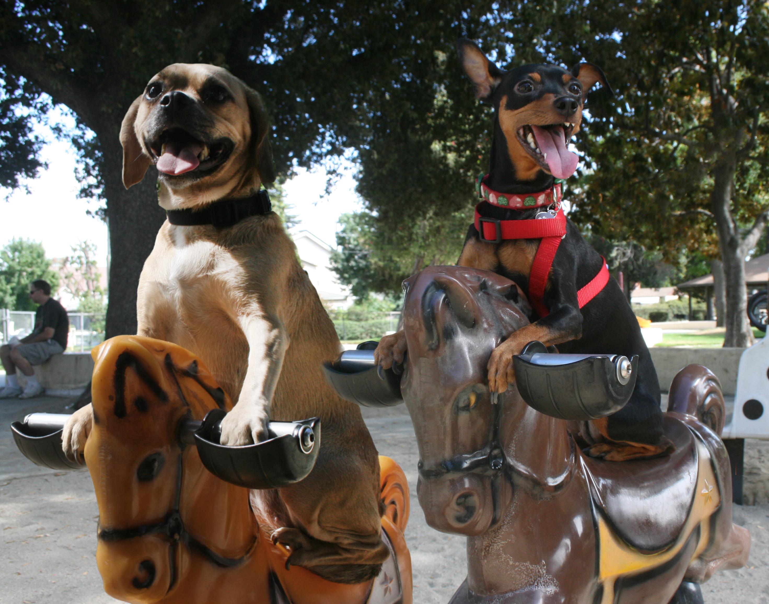 Pugzy Ruby horses