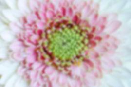 recover_pb-180105-Flowers-store-macro-00
