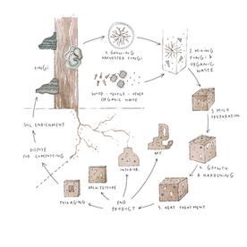 2021 Illustration for Mycela