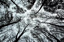 Bomen en struiken in wintertooi