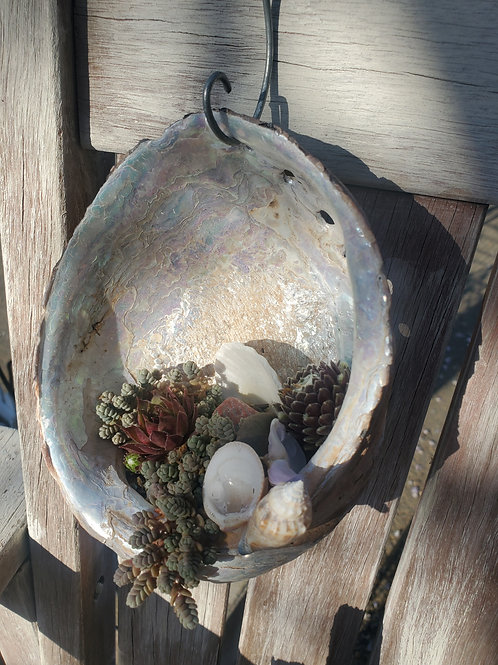 Abalone Shell w/Succulents