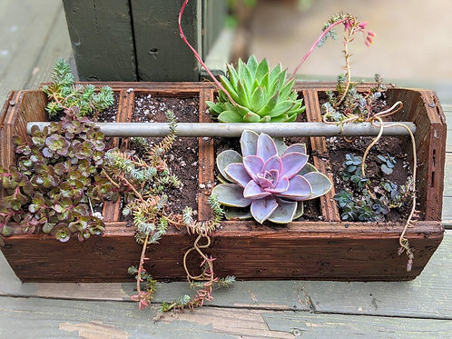 Vintage wooden tool caddy with large succulents