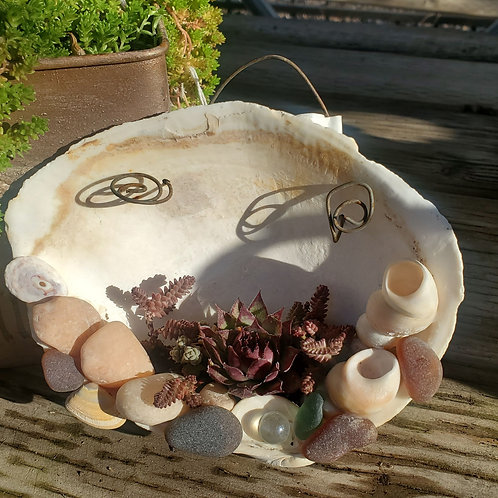 Shell w/ succulents