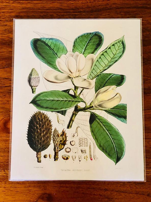 8 x 10 botanical print on archival paper