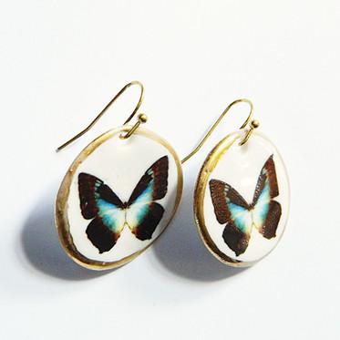 Cercei Blue Butterfly