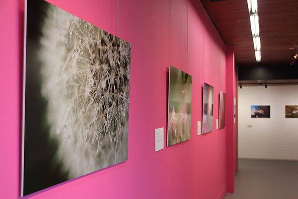 expositie printen.jpg