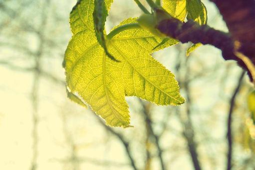 blog naturopathe, feuille, naturopathie, bordeaux, bio, écologie, nature