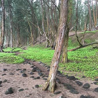 Pololu Valley Trails Hawaii Big Island hikes