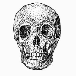 Skull - Front