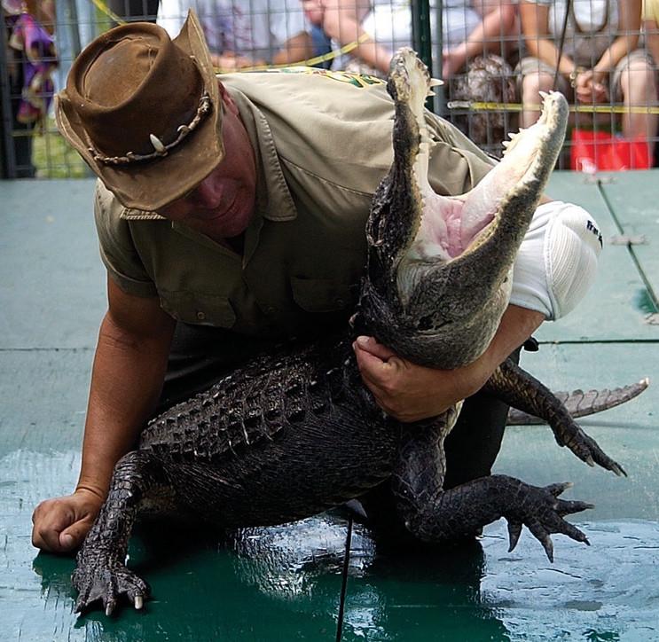 dg 090509 alligator show 4.jpg