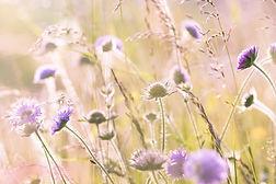 wildflowers-1406846_1920.jpg