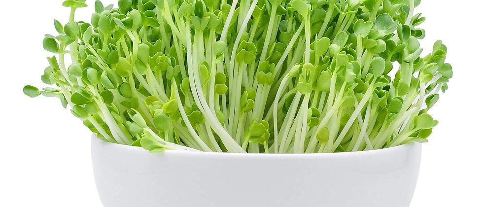 Radish MicroGreens Seeds | 100/150/250gms