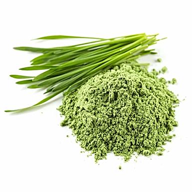 Wheat Grass Powder | 100gms | 100% Natural