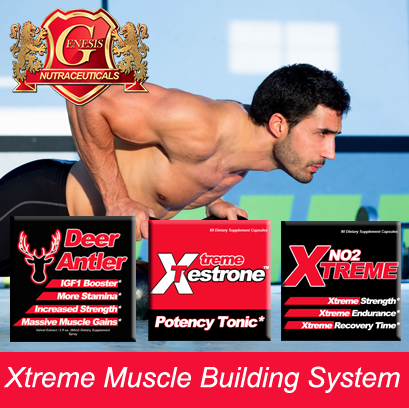 Muscle System Banner