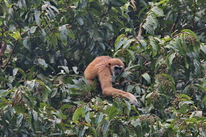 Khao Sok Wildlife_12