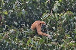 Khao Sok Wildlife_12