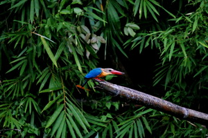 Khao Sok Wildlife_07