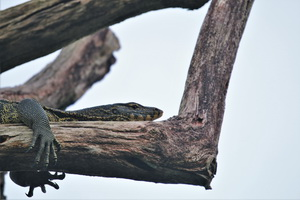 Khao Sok Wildlife_10