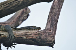 Khao Sok Wildlife_10