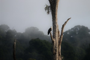Khao Sok Wildlife_16