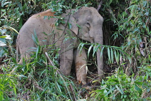 Khao Sok Wildlife_03