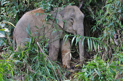 Khao Sok Wildlife_03