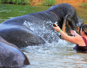Elephant Bath_1.jpg
