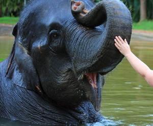 Elephant Bath_6.jpg